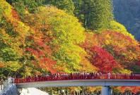 【名古屋発】約4,000本の木々が黄や紅に染まる『香嵐渓&小原 四季桜と紅葉の競演美』