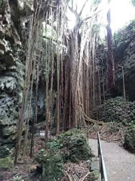 沖縄本島 ガンガラーの谷