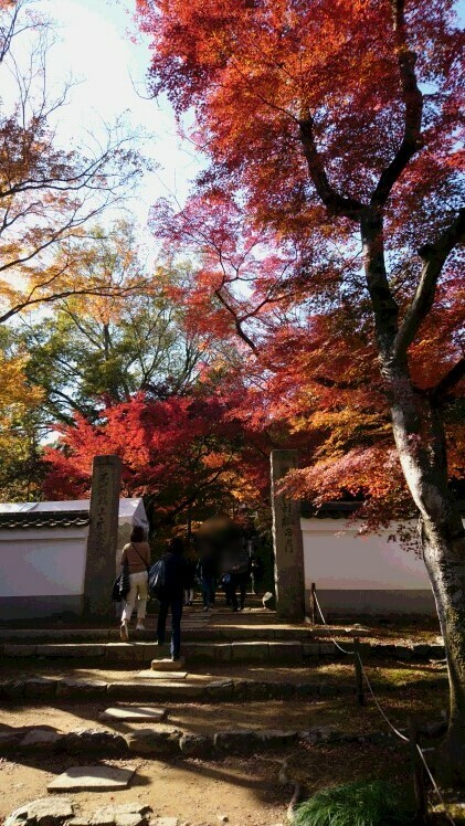 秋の京都オススメ紅葉スポット!