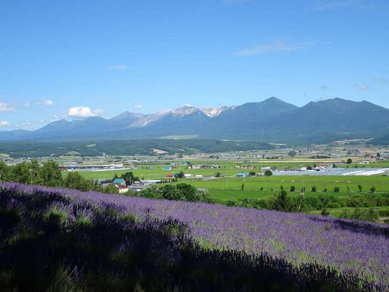 北海道:ラベンダーと十勝連山