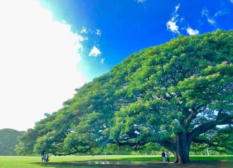 この木 なんの木 気になる木「モアナルア・ガーデン」