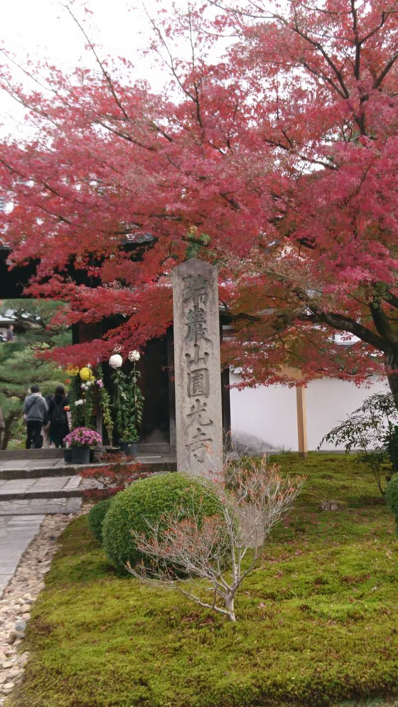 京都・秋のオススメ紅葉スポット♪