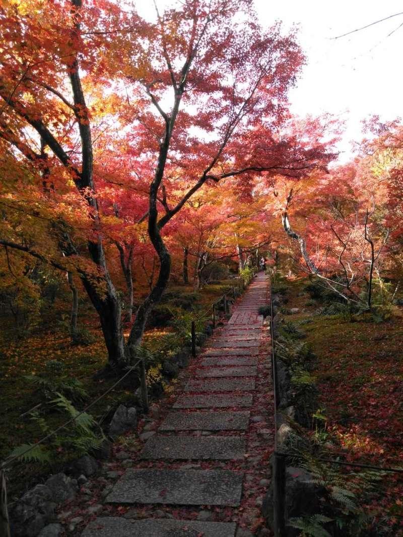 京都 おすすめの紅葉スポット