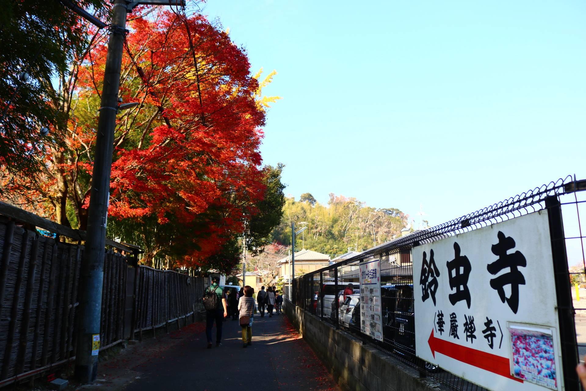 日帰り京都旅